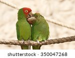 Kissing Parrots Sitting On A...