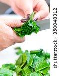 spinach | Shutterstock . vector #350048312