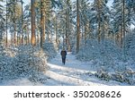 Snowy Forest In Sunlight In...