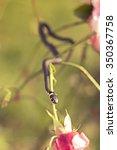 snake on a flower | Shutterstock . vector #350367758