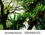 lush tropical green jungle  | Shutterstock . vector #350460152