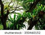 lush tropical green jungle  | Shutterstock . vector #350460152