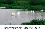 staya white birds swans coming... | Shutterstock . vector #350481536