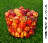 Ripe Red Apples In The Basket...