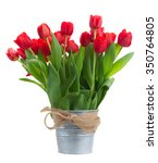 fresh red tulip flowers in... | Shutterstock . vector #350764805