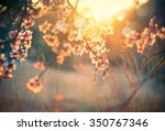 Spring Blossom Background....
