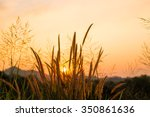 grass flower on sunset... | Shutterstock . vector #350861636