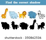 Find The Correct Shadow  Safar...