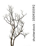 tree branches isolated on white ... | Shutterstock . vector #350935592