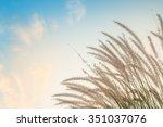 beautiful relax garden and sky... | Shutterstock . vector #351037076