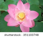 pink blossom lotus flower in... | Shutterstock . vector #351103748