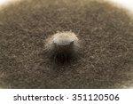 Small photo of Close up of Alternaria alternata strain grown in PDA, potato dextrose agar