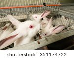 rabbits in a cage | Shutterstock . vector #351174722