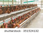 Chicken And Farms