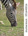 zebra head    Shutterstock . vector #351640016