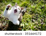 Stock photo a cat is jumping and trying to catch something 351664172