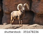 large bighorn sheep ram of the... | Shutterstock . vector #351678236