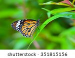 beautiful monarch butterfly on... | Shutterstock . vector #351815156