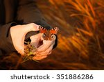 Small photo of Hands of a boy helping a peacock butterfly - inachis io - benumbed with cold outside in the Orlicke Mountains meadow in the evening autumn sunlight