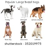 different large breeds of dogs... | Shutterstock . vector #352019975