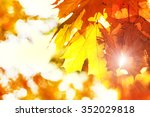 beautiful autumn maple leaves...   Shutterstock . vector #352029818