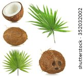 Fresh Coconuts With Palm Leave...