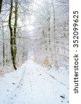 foggy winter forest  | Shutterstock . vector #352099625