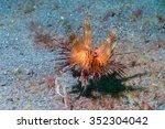 colorful sea urchin detail... | Shutterstock . vector #352304042