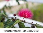 rad flower | Shutterstock . vector #352307912