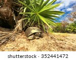 Gopher Tortoise Ponce Inlet ...