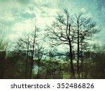 forest   Shutterstock . vector #352486826