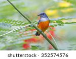 orange bellied flowerpecker... | Shutterstock . vector #352574576
