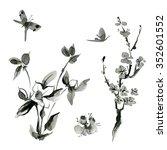 traditional oriental plants ... | Shutterstock . vector #352601552