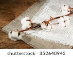 Branches Of Cotton  Fiber On A...