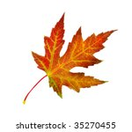 perfect autumn leaf over white | Shutterstock . vector #35270455