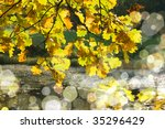 autumn leaves | Shutterstock . vector #35296429