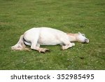 Horse Laying On The Grass...