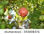 pomegranate   Shutterstock . vector #353008376