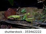 praying mantis  wildlife insect ... | Shutterstock . vector #353462222
