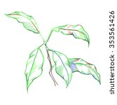 green leaves plant sketched... | Shutterstock .eps vector #353561426