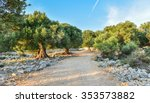 big and old ancient olive tree... | Shutterstock . vector #353573882