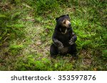 Sunbear Sitting On The Ground...