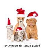 Group Of Cats And Dogs In Red...