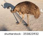 Australia  Monkey Mia  01 04...