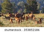 A Herd Of Mother Elk With...