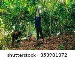 patthalung  thailand   dec 13   ... | Shutterstock . vector #353981372
