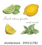 vector set of fresh citrus... | Shutterstock .eps vector #354111782