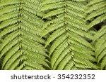 green fern leaves  | Shutterstock . vector #354232352