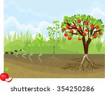 life cycle of apple tree | Shutterstock .eps vector #354250286