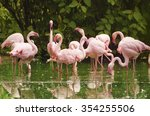 Group Of Phoenicopterus Roseus...